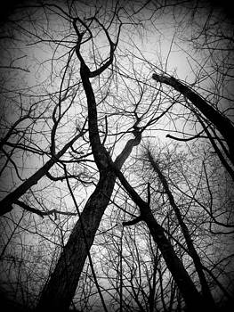 Many Tree Branches by Barbara Ferreira