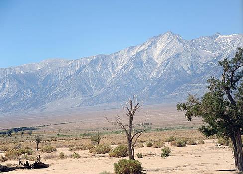 Manzanar-Sierra Nevada Mountains I by Harold E McCray