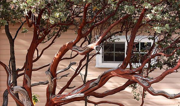 Manzanita by Denice Breaux