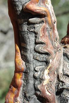 Manzanita Scar by Curtis Jones