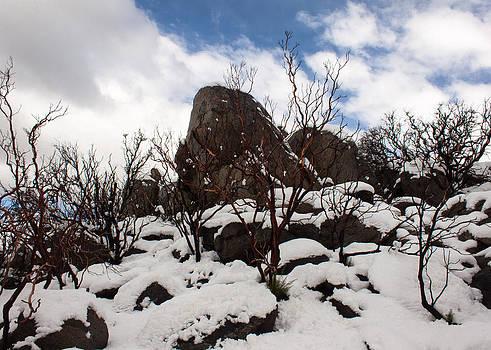 John Daly - Manzanita Winter