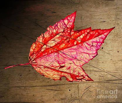 Linda Rae Cuthbertson - Maple Leaf Antique Wood Texture