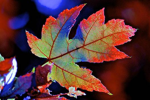 Maple Leaf colored by a Rainbow by Rita Mueller