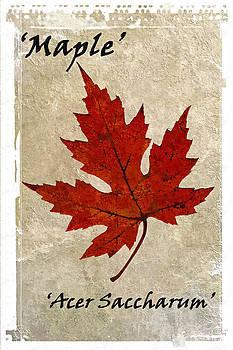 David Pringle - Maple Leaf