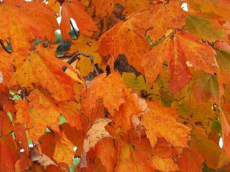 Maple Orange by Gene Cyr
