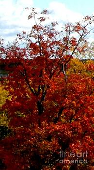 Gail Matthews - Maple Tree in Flaming Color
