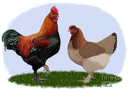 Marans Rooster and Hen by Leigh Schilling