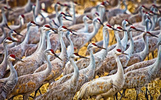 March of the Cranes by Helene Kobelnyk