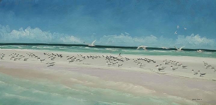 Marco Island Sandbar by Steve Haigh