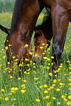 Mare and Colt by Rob Whitney