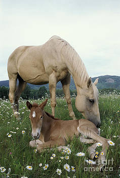Rolf Kopfle - Mare And Foal