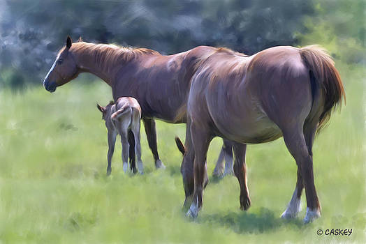 Mares and Foal by Bethany Caskey