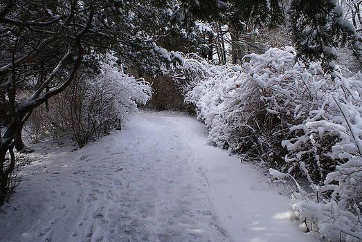 Marginal Way in Winter 2  by Paul Lavoie