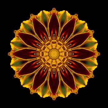 Marigold Flower Mandala by David J Bookbinder