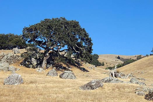 Marin County landscape by Daniela Safarikova