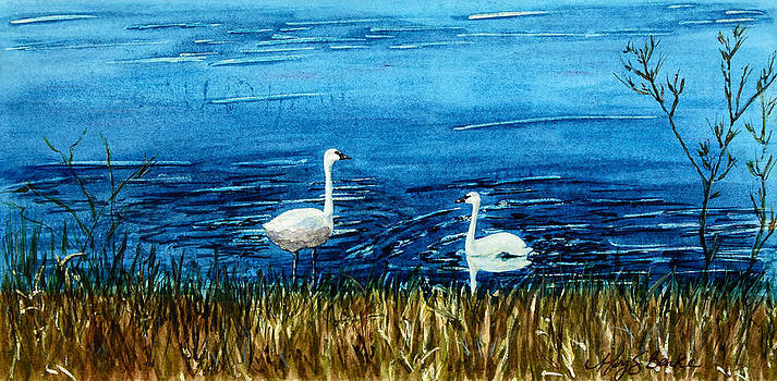 Mary Benke - Marion Lake Swans
