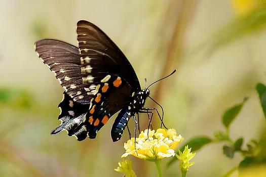 Mariposa 1 by Katelyn Bird
