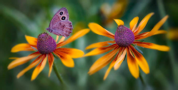 Mariposa Dos Flores by Bill Johnson