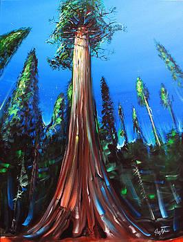 Mariposa Grove by Jennifer Treece