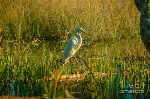 Dale Powell - Marsh and Wetlands of SC