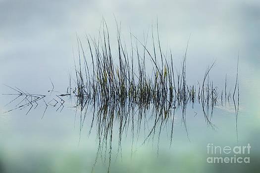 Marsh Grass by Barbara Youngleson