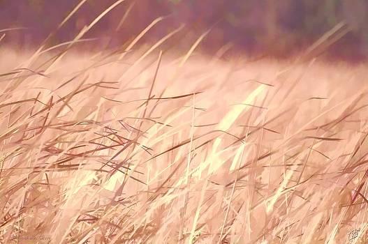 Marsh Grass by Christopher Grove