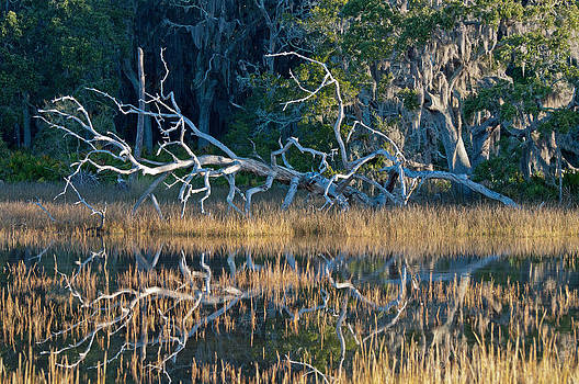 Marsh Grasses and Moss-Covered Trees on Jekyll Island 1.6 by Bruce Gourley