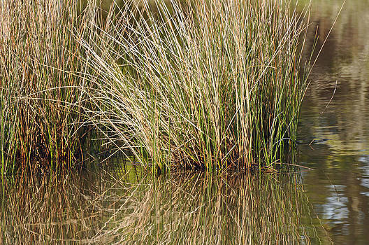Marsh Grasses Reflected in Water at High Tide by Bruce Gourley