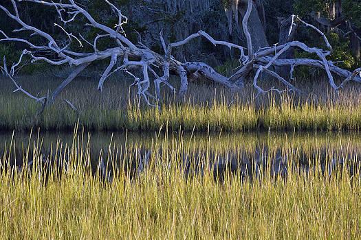 Marsh Morning on Jekyll Island by Bruce Gourley