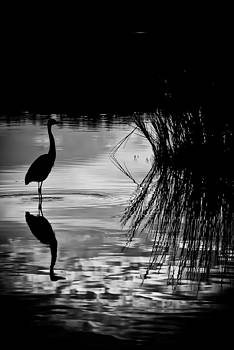 Marsh Reflection by Francis Trudeau