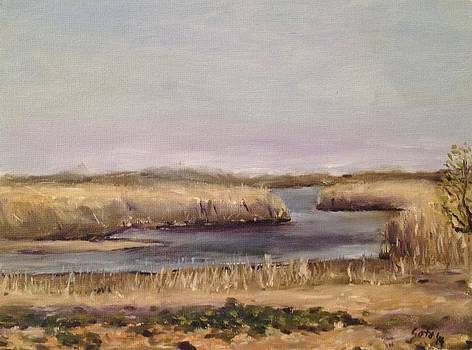 Marshland at Gateway National Park by Victor SOTO