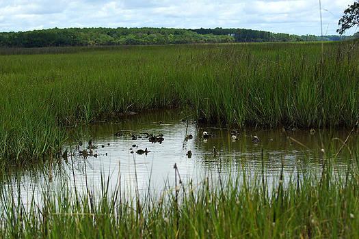 Marshlands Around Hilton Head Island by Kim Pate