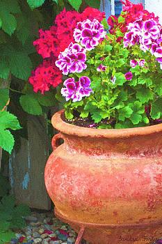 Sandra Foster - Martha Washington Geraniums In Textured Clay Pot