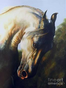 Marwari by Amanda Hukill