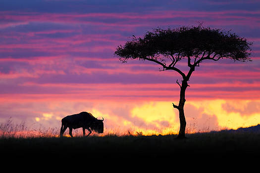 Masai Mara on Fire by Mario Moreno
