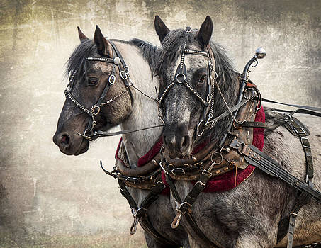 Matched Pair by Judy Neill