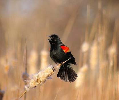 Mating Season by Sean Murray