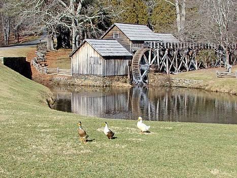Maubry Mill by Bill Talich