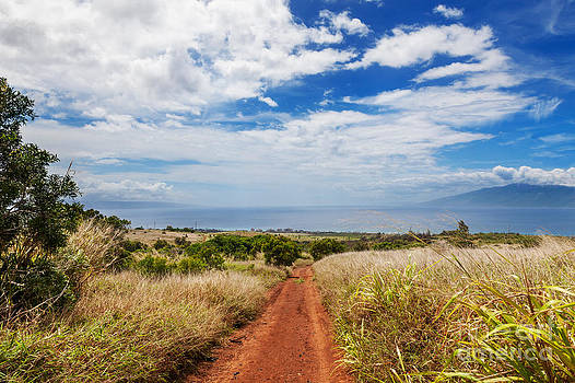 Jo Ann Snover - Maui hillside with dry grasses and dirt road