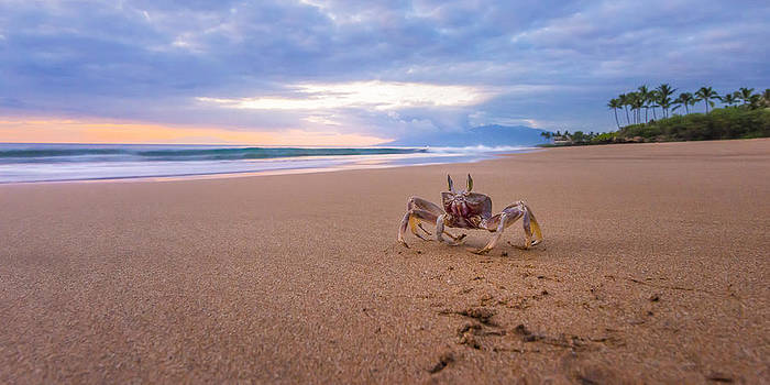 Maui Sand Crab by Hawaii  Fine Art Photography