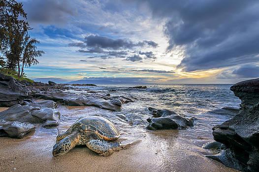 Maui Sea Turtle by Hawaii  Fine Art Photography