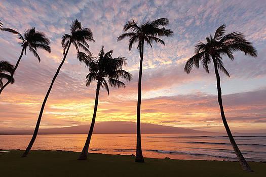 Maui Sunrise by David Olsen