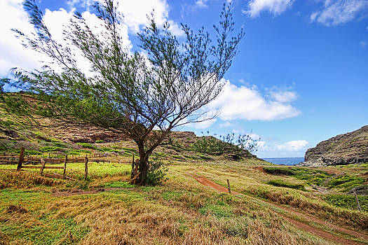 Maui Wind by Rick Lewis
