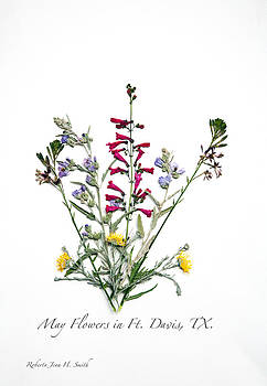 May Flowers in Fort Davis by Roberta Jean Smith