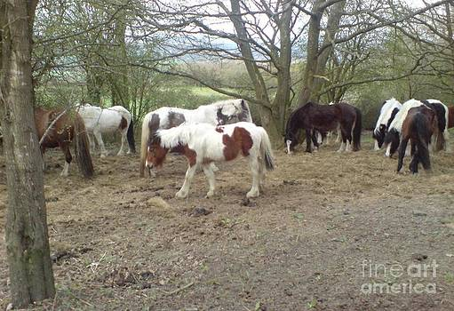 May Hill Ponies 2 by John Williams