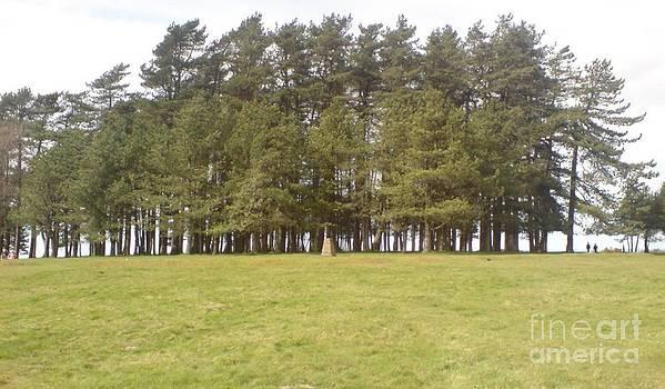 May Hill Tree Tops by John Williams