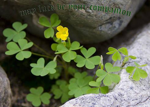 LeeAnn McLaneGoetz McLaneGoetzStudioLLCcom - May Luck Be Your Companion