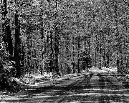 McDowell Park Road In Winter by Michael Tipton