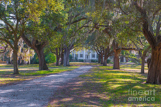 Dale Powell - McLeod Plantation