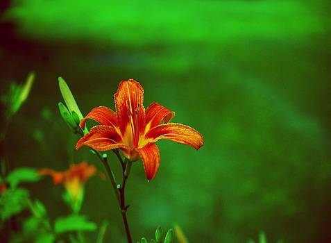 Gary Wonning - Meadow Beauty